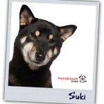 Family Profiles Suki