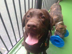 Dog Play Areas Perth