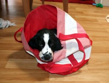 Inside Dog Area