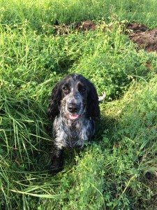 Dog Photos in Perth Yokine, Mirrabooka, Balga, Osborne Park, Innaloo, Westminister