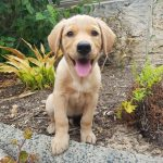 Australia's Favourite Pets – Cats or Dogs and Puppies?