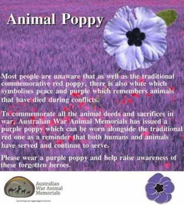 Animal Poppy, FurBaby