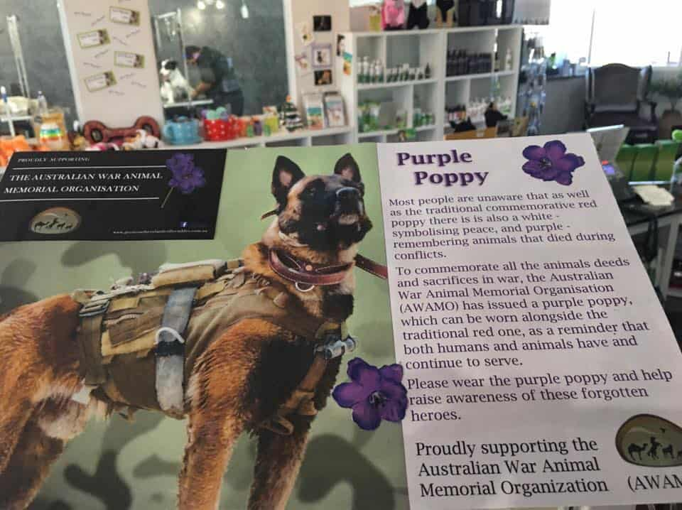 Purple Poppy, FurBaby