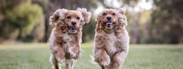 FurBaby Dog Running Outdoor