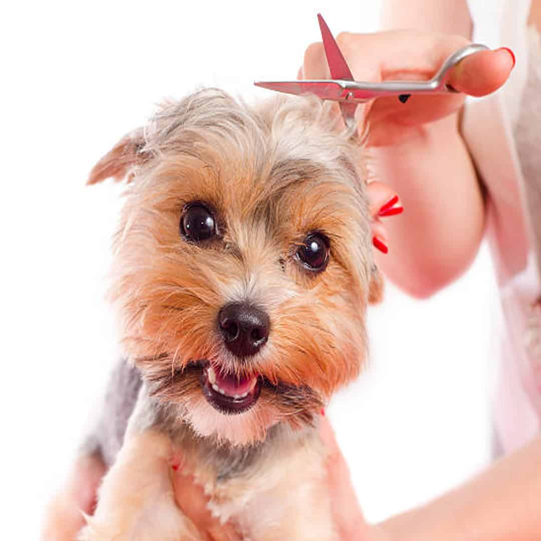 Grooming in Perth | Dog Cafe | Pet Friendly Grooming Service Perth