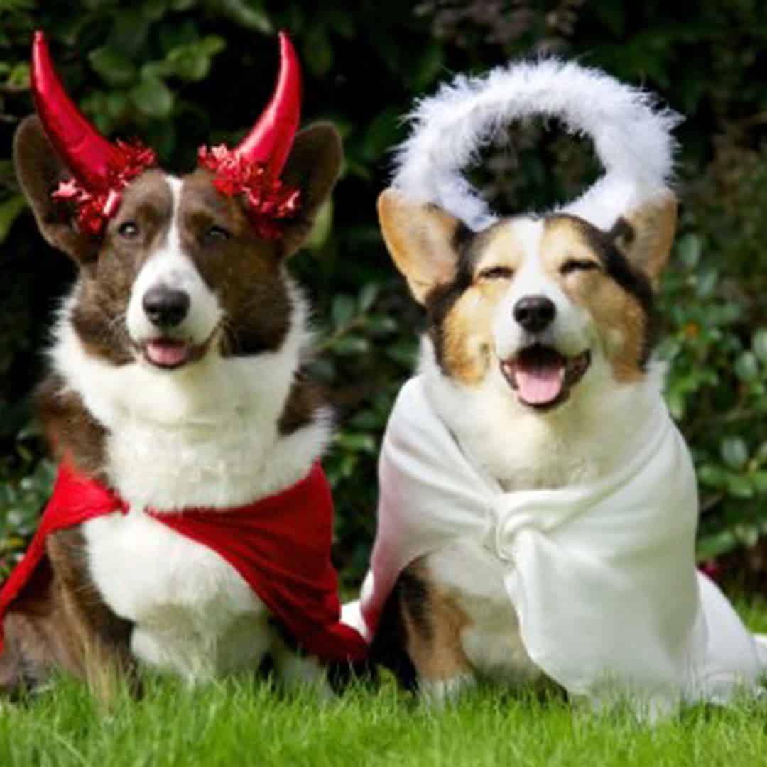 Howloween | Halloween for Dogs Perth