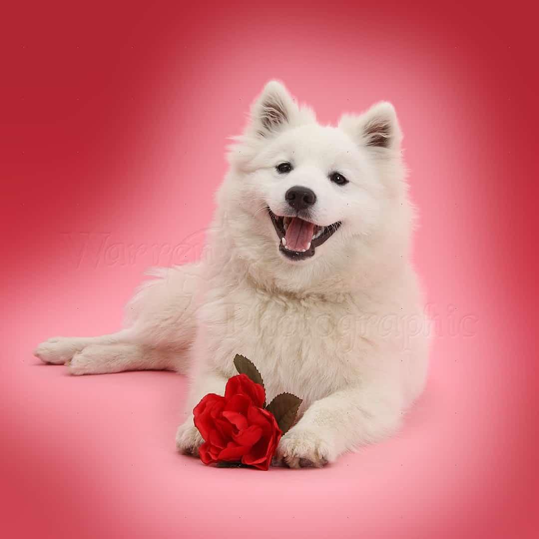 Valentines Day   Dog Love   Perth   Dog Cafe