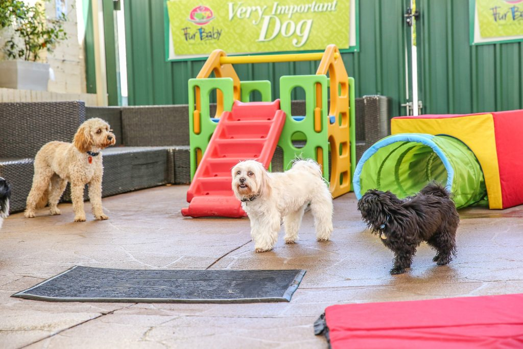 Dog Play Equipment and Play Centre | Dog Play area | Dog Hire Event Area Perth | Westminster | Mirrabooka | Balga | Osborne Park | Balcatta