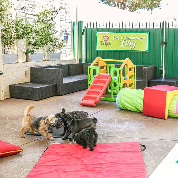 Dog Playdates | Doggy Daycare |Day Care Perth | Westminster Cafe | Coffee Shop | Pet Friendly Cafe Perth