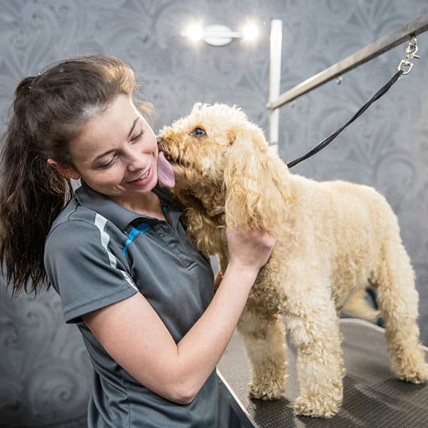Dog Grooming Salon Perth | Grooming Services | Groomers | Dog Groomer | Perth | Westminster | Mirrabooka | Osborne Park | Balcatta | Doggy Grooming
