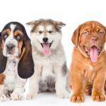 Puppy Talent Search