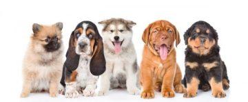 Puppies at FurBaby