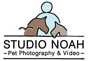 Studio Noah